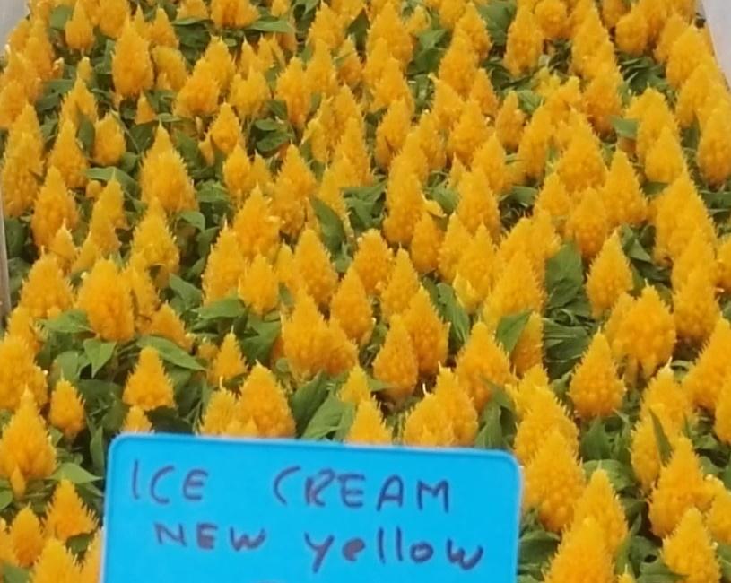 Ice cream yellow improved